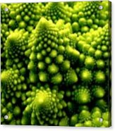 Broccoli Acrylic Print
