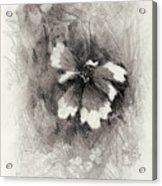 Broken Blossom Acrylic Print