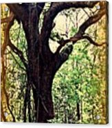 Broken Branch Acrylic Print