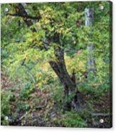 Broken Branches Acrylic Print