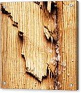 Broken Old Stump Spruce Acrylic Print