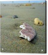 Broken Sand Dollar - Low Tide At Manhattan Beach Acrylic Print