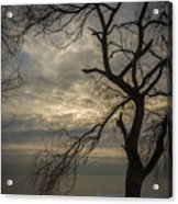 Broken Tree Acrylic Print