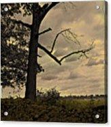 Broken Tree Acrylic Print