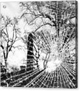 Broken Trees Acrylic Print