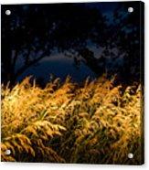 Brome Grass In A Field Near Princeton Acrylic Print
