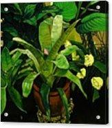 Bromeliad Acrylic Print by Doug Strickland