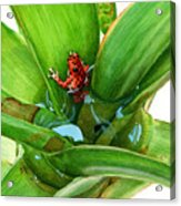 Bromeliad Microhabitat Acrylic Print by Logan Parsons