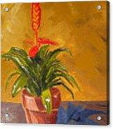 Bromeliad Vriesea Acrylic Print
