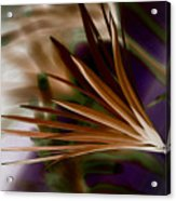 Bronze Ferns Acrylic Print