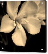 Bronze Frost White Flower Acrylic Print