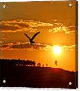 Bronze Sunset Acrylic Print