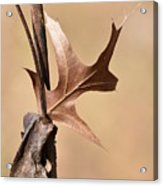 Bronzed Oak Leaf Vertical Acrylic Print