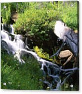 Brook And Deadfall Acrylic Print