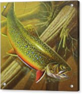 Brook Trout Cover Acrylic Print