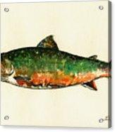 Brook trout Acrylic Print