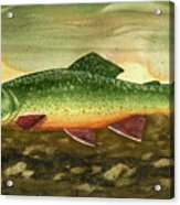 Brook Trout Acrylic Print