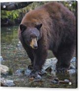 Brother Bear Acrylic Print