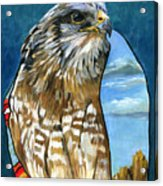 Brother Hawk Acrylic Print