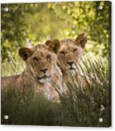 Brothers Acrylic Print
