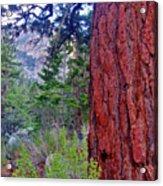 Brown Bark Acrylic Print
