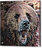 Brown Bear Acrylic Print