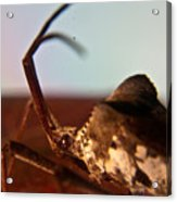 Brown-eyed Bug Acrylic Print