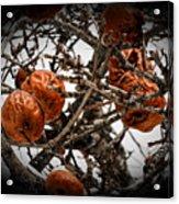 Brown Fruit Abstract Acrylic Print