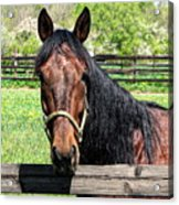 Brown Horse In A Corral Acrylic Print