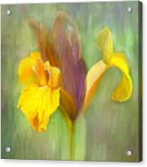 Brown Iris Acrylic Print