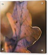 Brown Leaf Acrylic Print