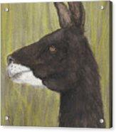 Brown Llama Profile Cathy Peek Farm Animal Art Acrylic Print