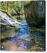 Brown Mountain Forest Acrylic Print