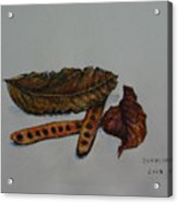 Brown Of Leafs And Seeds Acrylic Print