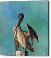 Brown Pelican - Fort Myers Beach Acrylic Print