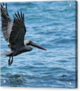Brown Pelican In Flight Over Water Acrylic Print