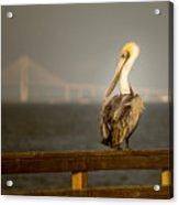 Brown Pelican On St. Simons Island Pier Acrylic Print