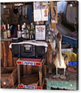 Brown Pelican Visiting Mexican Beach Bar Acrylic Print