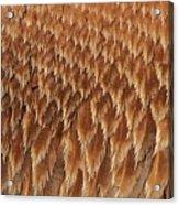 Brown Pelican Wings Acrylic Print