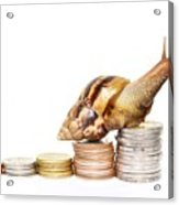 Brown Snail Climbing To The Top Of The Pile Of Coins  Acrylic Print