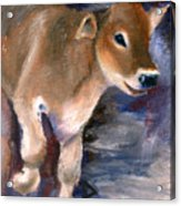 Brown Swiss Calf Aceo Acrylic Print