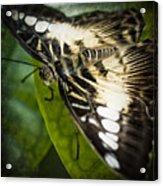 Brown_clipper Acrylic Print