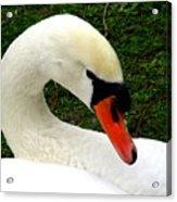 Bruges Swan 2 Acrylic Print