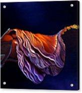 Brused Hibiscus Acrylic Print