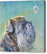 Brussels Griffon With Butterfly Acrylic Print