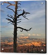 Bryce Canyon Dead Tree Sunset 3 Acrylic Print