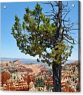 Bryce Canyon Fairyland Point Portrait Acrylic Print