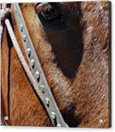 Bryce Canyon Horse Portrait Acrylic Print