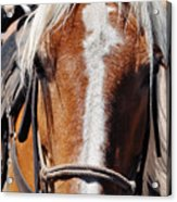 Bryce Canyon Horseback Ride Acrylic Print