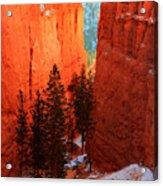Bryce Canyon Sunrise Glow Acrylic Print